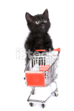 stock-photo-5828725-shopping kitten